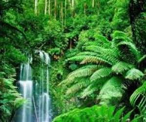 The Rainforest Roadshow is coming to Year 4!